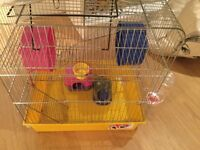 Hamster cage and accessories - all you need