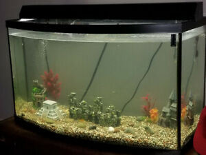 50 gallon bow front fish tank comes w/everything even fish $250