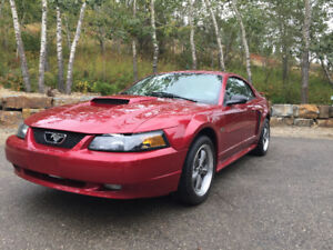 Absolutely Mint 2003 Mustang GT
