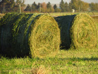 2015  3RD CUT ROUND BALES FOR SALE