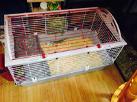 guinea pigs with huge cage and supplies