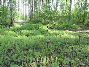 Cabin and two 1/2 acre lots by slave lake Strathcona County Edmonton Area image 6