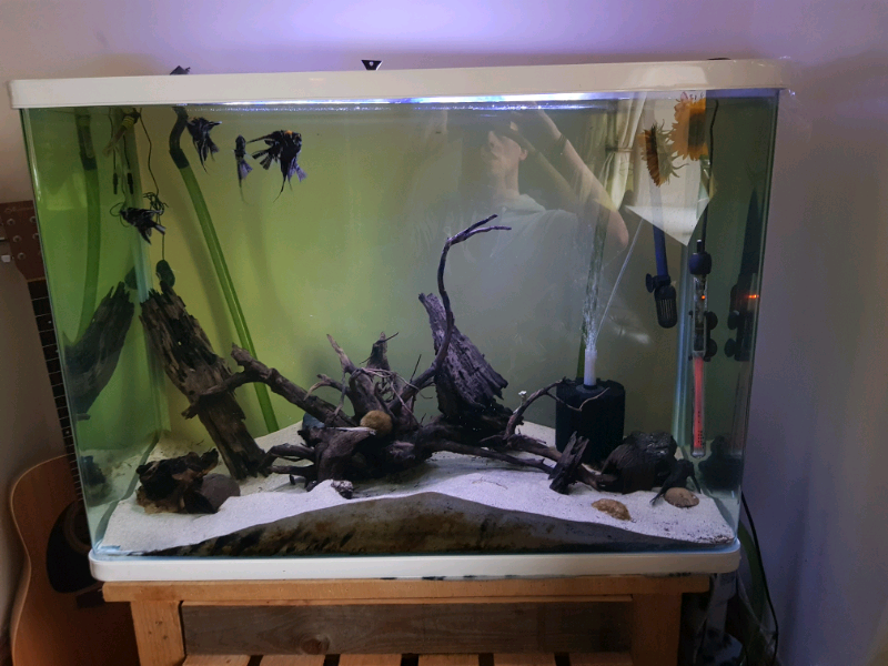 Remarkable 280L Fish Tank Full Setup In Oxenhope West Yorkshire Gumtree Download Free Architecture Designs Scobabritishbridgeorg