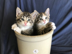 Kittens for good indoor home