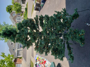 Christmas tree with lights for sale!