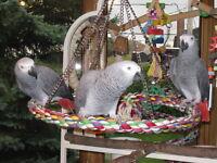 Garderie VIP pour perroquet.
