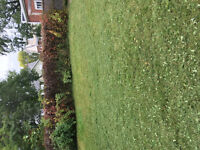 Lawn cut / general cleaning / yard cleaning / and more