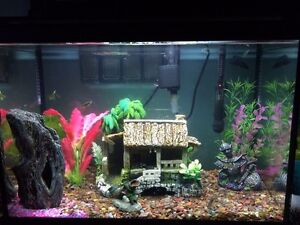 Selling a 20 gallon fish tank with fish and accessories