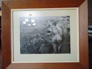 Lion Print given by The Archbiship of East Africa 1965 London Ontario image 1