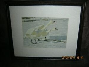 Framed Robert Bateman - Courting Pair - Whistling Swans