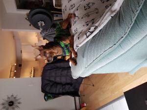 Recherche appartement avec droit aux chiens