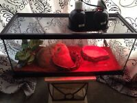 Adult Male Ball Python w/ Tank & Accessories