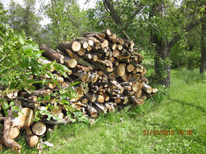 cut firewood  for your camp fires