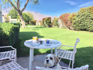 Palm Springs Condo - Dog Friendly