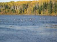 Waterfront Acreages for sale 3 1/2 miles east of Valleyview, AB