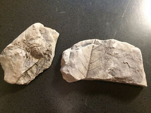 Cool Fossilized Leaves