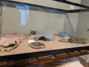 Looking to rehome 2 leopard geckos with tank and all supplies