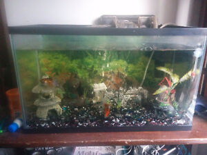Complete tank setup with 2 goldfish