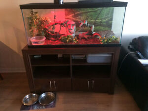 3 year old ball python ,75g Tank, Stand