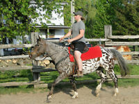 ALL ROUND LEOPARD SPOT APPY MARE