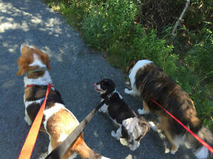 Dog walker available St. John's Newfoundland image 2