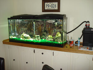55 GALLON Aquarium with fish 350 O.B.O.