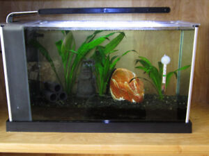 Fish tank with accessories and fish