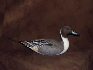 Pintail Duck Decoy