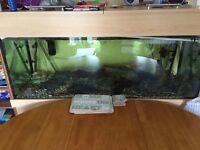 5 foot tank