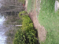 CEDAR TREES/GRASS CUTTING/ TREE, SHRUB REMOVAL, YARD CLEAN UP