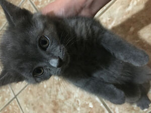 Kittens to be rehome