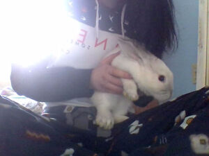 my bunny needs a new home
