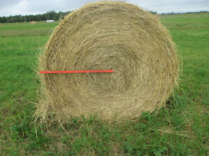 2018 upland hay cut in July - Alf, red clover, grass mix
