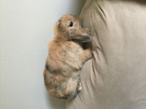 Bunny for sale!
