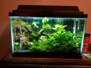10g Planted Fish Tank W/EVERYTHING