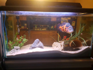 Oscar and fish tank