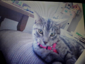 MISSING CAT! PLEASE HELP US FIND HER,
