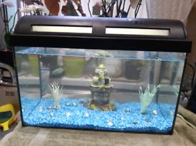 Fish tank full tropical set up