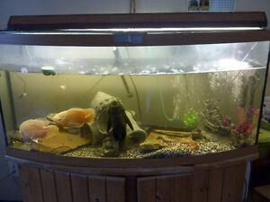 Bowfront Aquarium 80 Gallon - Price reduced!