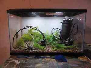 10gallon fish tank, comes with all you see!