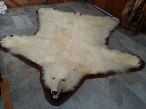 Big, beautiful, 8 foot Canadian polar bear rug. - Victoria