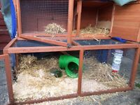 Two Rabbits - Perfect Health + Outdoor Hutch