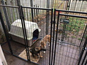 Dog Kennel with latch door and dog house .Dogs not included