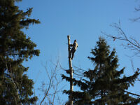 "BRIAN""S TREE & LIMB REMOVAL SERVICE"