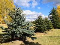 Spring tree planting now available!!!