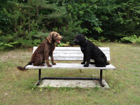 Experienced Dog Walker - Fall and Winter openings- Book now