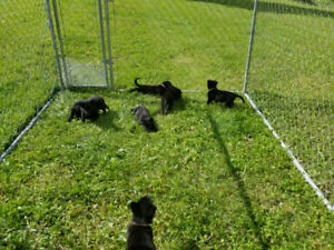 Adopt Dogs & Puppies Locally in Grande Prairie   Pets