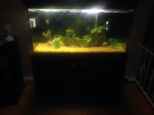 90 Gallon Tank With Cabinets And More!!!