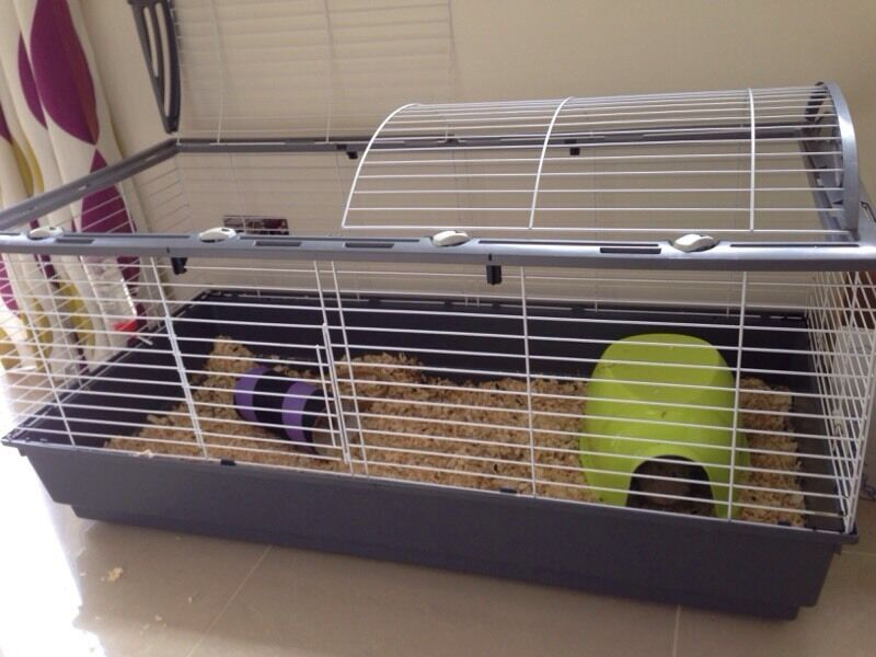 ferplast extra large guinea pig cage and accessories in