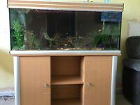 Fish tank £300